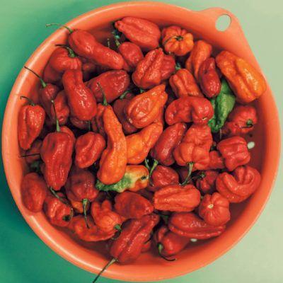 Chile Monoloco / Ghost pepper